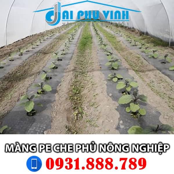 Màng PE che phủ nông nghiệp - màng pe dùng trong nông nghiệp - nhà kính. Lh 0931888789