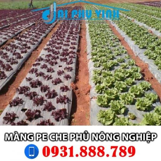Màng phủ nông nghiệp – Màng pe che phủ nông nghiệp. Lh đặt hàng 0931888789